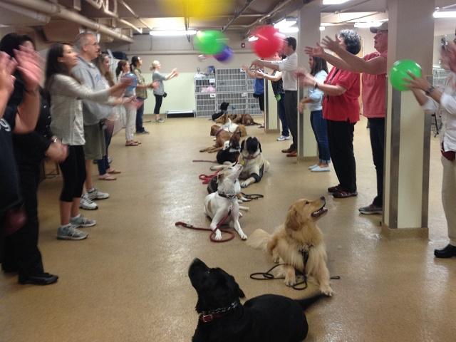 The Pawsitive Dog Dog Boston Dog Training Lincoln Dog